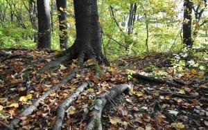 Użytek Ekologiczny Las Buczyna